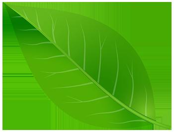 Green Provider